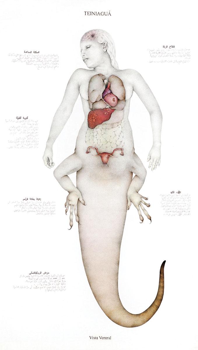 teniagua-vista-ventral